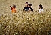 Four Children in a Wheat Field