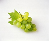 Bunch of Plump Green Grapes