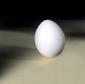 A Single White Egg