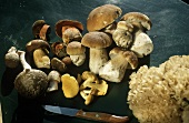 Various mushrooms & a kitchen knife on green background