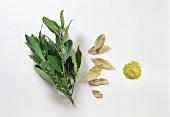 Bay; fresh, dried & ground bay leaves