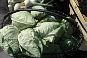 A wire basket with a pointed cabbage at the market