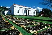 Maison de la Vanille (Saint Andre); vanilla plantation