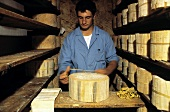 A Young Man Preparing Gorgonzola Cheese to be Aged