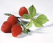 Fresh Raspberries