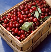 Many Red Cherries in a Basket