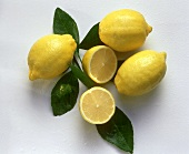 Three whole and one halved lemon on branch