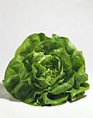 One Head of Butterhead Lettuce