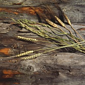 Cereal ears (oats, wheat and barley) on wooden background