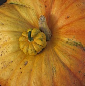 One large and one small orangey-yellow pumpkin