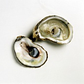 Two halves of an oyster (Cape Cod)