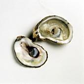 Zwei Hälften einer Auster (Cape Cod)