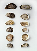 Various oysters side by side (whole and halves)