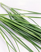 Garlic chives (close-up)