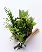 Assorted Herbs in a Basket with Garden Tools