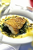 Pike Perch Fillet on Spinach