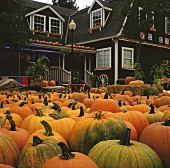 Pumpkins in front of house at a pumpkin farm