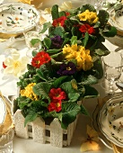 Decorative window box with primroses as table decoration
