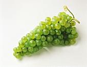 Grüne Weintraube