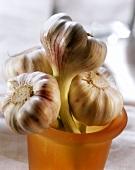 Garlic bulbs in glass beaker