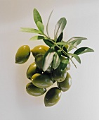 Fresh green olives and an olive branch