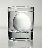 Ei (ca. 1 Woche alt) aufgerichtet auf Glasboden