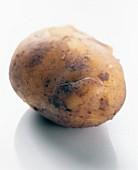 Potato, variety: Italian Sieglinde