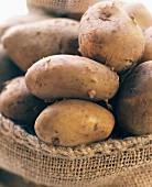 Potatoes in sack, variety: Italian Sieglinde