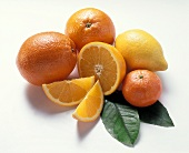 Lemon, oranges, orange slice, mandarin & leaves