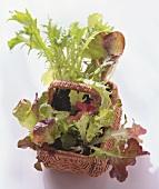 Young lettuce plants in wicker basket