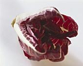 Radicchio (variety: Rossa di Verona)