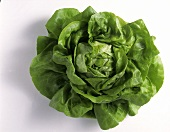 A Large Head of Butterhead Lettuce