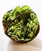 Lettuces in a wicker basket
