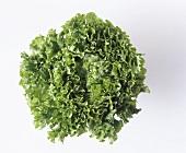 Fresh Green Leaf Lettuce