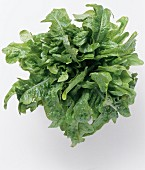 A Bunch of Fresh Green Leaf Lettuce