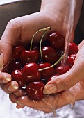 Hands holding cherries under running water