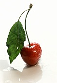 A Single Wet Red Cherry with Leaf and Stem