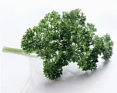 A sprig of curly parsley