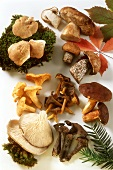 Various mushrooms with moss, leaves on white background