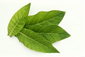 Four tobacco leaves