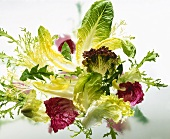 Assorted salad leaves on sheet of glass