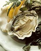 Rohe geöffnete Auster, Deko: Seetang, Zitronenschnitz