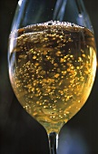 Glass of Champagne; Close Up