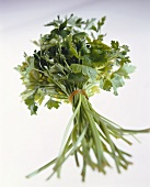 A posy of parsley