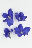 Four blue larkspur flowers