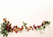 Round and oval rose hips on white background
