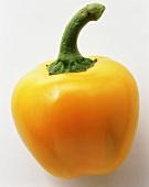 A yellow mini-pepper