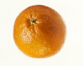 One orange on white background