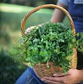 A Wicker Basket Full Of Fresh Herbs