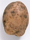 A Bintje potato (floury)